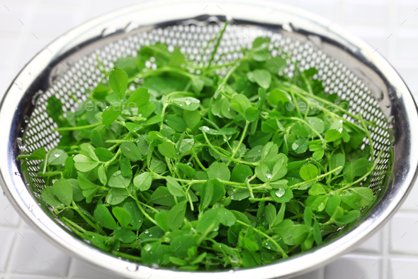 toothed bur clover - Stock Photo - Images