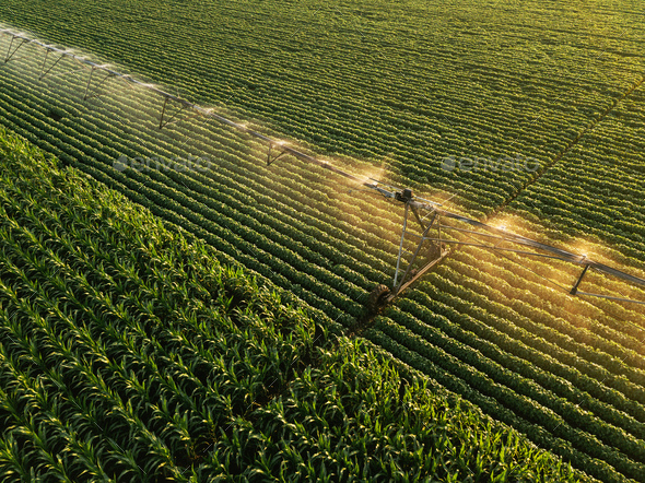 Aerial view of irrigation equipment watering green soybean crops - Stock Photo - Images