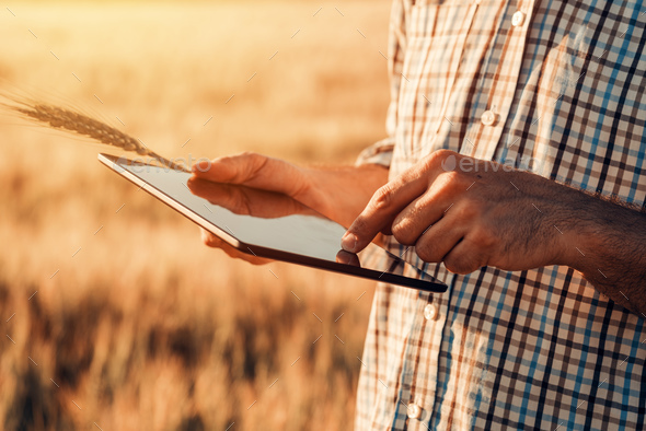 Smart farming, using modern technologies in agriculture - Stock Photo - Images