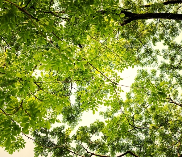 Green tree tops - Stock Photo - Images