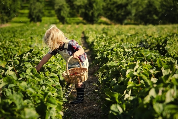 Kid in strawberry farm - Stock Photo - Images