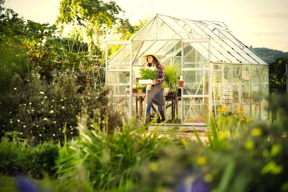 Young woman in the glass greenhouse - Stock Photo - Images