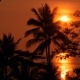 Palm Trees Silhouettes on Tropical Beach at Vivid Sunset Time. Exotic Trees and Big Orange Sun - VideoHive Item for Sale