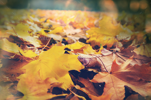 Autumn leaves - Stock Photo - Images