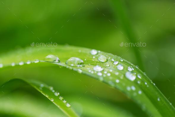 Dew drop - Stock Photo - Images