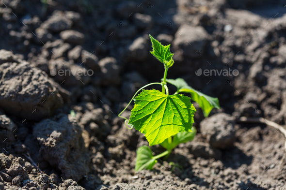Sprout - Stock Photo - Images