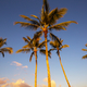Palm plantation - PhotoDune Item for Sale