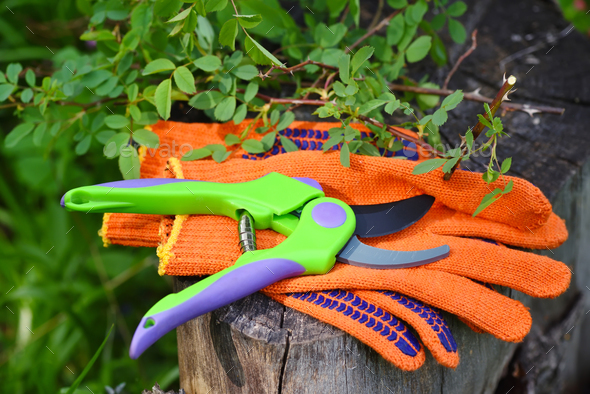 Garden gloves with a pruner for working in the garden - Stock Photo - Images