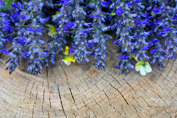 Ajuga reptans flowers on a wooden background - Stock Photo - Images