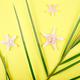Orange fruit, starfish and palm leaves - PhotoDune Item for Sale