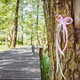 White and pink ribbon on a tree. - PhotoDune Item for Sale