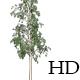 Aspen Trees - VideoHive Item for Sale