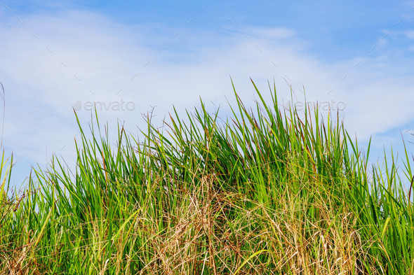 grass with blue sky - Stock Photo - Images