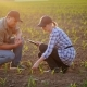 Farmers Work in the Field, They Sit Near the Green Shoots of Young Plants. Debate, Use the Tablet - VideoHive Item for Sale