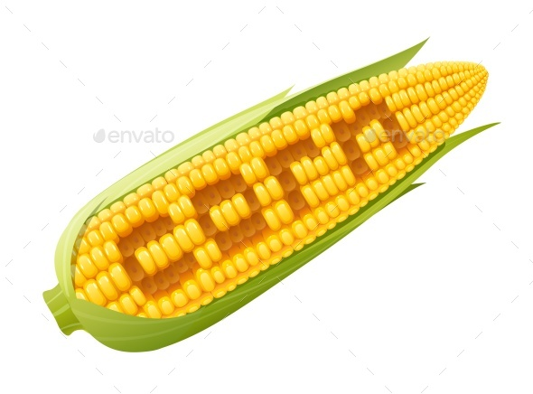 Corn Cob - Food Objects