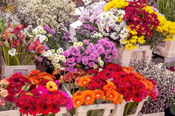 Flowers in market - Stock Photo - Images