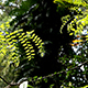 Fern Plants And Trees In Nature 0927 - VideoHive Item for Sale