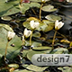Lily Pond Surface Vegetation - VideoHive Item for Sale
