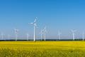 Wind power plants in a blooming rapeseed field - PhotoDune Item for Sale