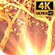 Gold Light Trees 4k - VideoHive Item for Sale