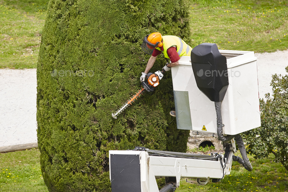 Equiped worker pruning a tree on a crane. Gardening works - Stock Photo - Images