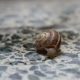 The Snail Is Crawling on the Stone Floor - VideoHive Item for Sale