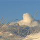 Frost Covered Grass During an Cold Winter Morning - VideoHive Item for Sale