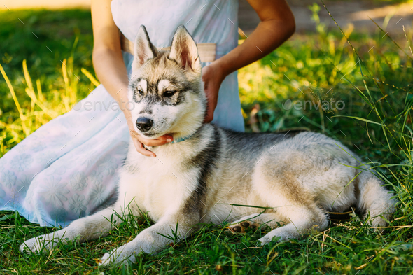 Little Girl And Her Dog Husky In Summer Park - Stock Photo - Images
