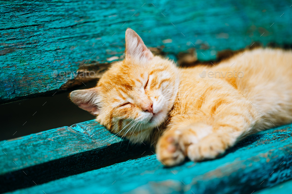 Red Kitten Cat Sleeps On A Bench In Park - Stock Photo - Images