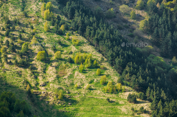 Forest Growing On A Hillside Mountain In Summer Season In Kazbeg - Stock Photo - Images