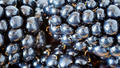 Extreme close up picture of blackberries.