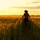 Child Boy Runs To Catch His Mother in the Golden Wheat Field - VideoHive Item for Sale