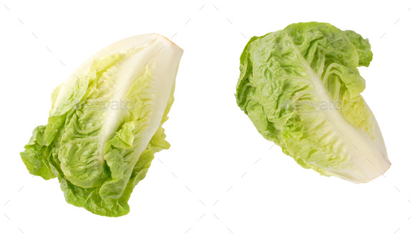 little gem lettuce - Stock Photo - Images