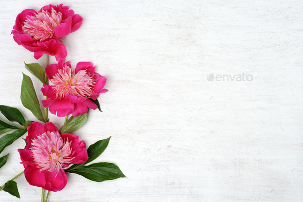 floral arrangement of peonies - Stock Photo - Images