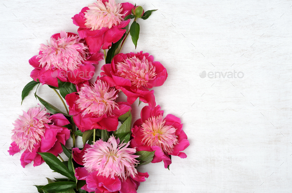 floral arrangement of peonies - Stock Photo - Images