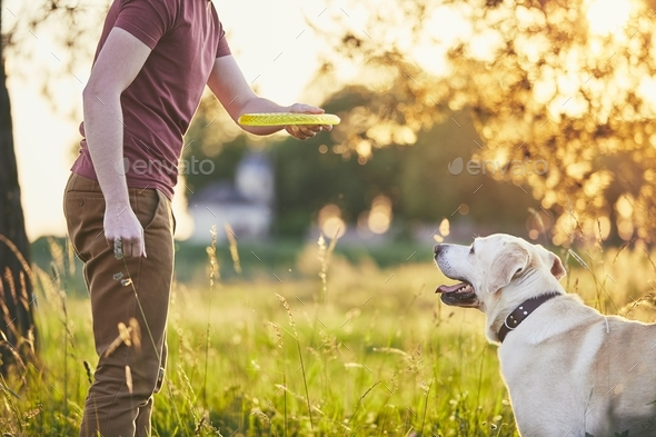 Man with his dog at sunset - Stock Photo - Images