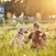Man with his dog at sunset - PhotoDune Item for Sale