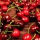 Bottle of Cherry Wine and Around Scattered Cherries on Wooden Table - VideoHive Item for Sale