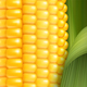 Realistic Corn Background