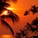 Palm Tree Silhouettes on Tropical Beach at Vivid Sunset Time - VideoHive Item for Sale