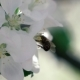 Footage. Bee Flying Collecting Pollen From Flowers - VideoHive Item for Sale
