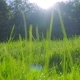 Green Grass at Dawn with Droplets of Dew in Backlight - VideoHive Item for Sale