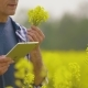 Farmer With Digital Tablet Examining Rape Blossom On Field - VideoHive Item for Sale