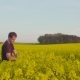Farmer Examining Rape Blossom on Field - VideoHive Item for Sale