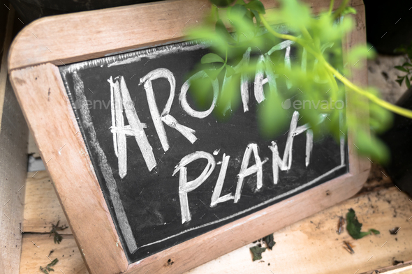 "Small blackboard with ""Aromatic Plant"" inscription - Stock Photo - Images"