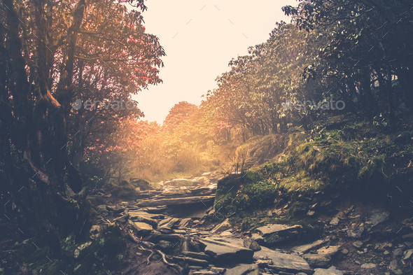 Trail through a mysterious forest - Stock Photo - Images