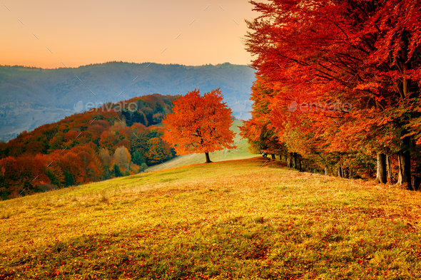 Colorful autumn landscape - Stock Photo - Images