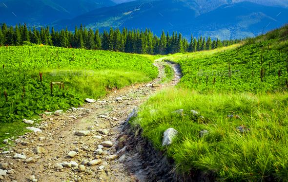 Carpatian summer landscape. - Stock Photo - Images