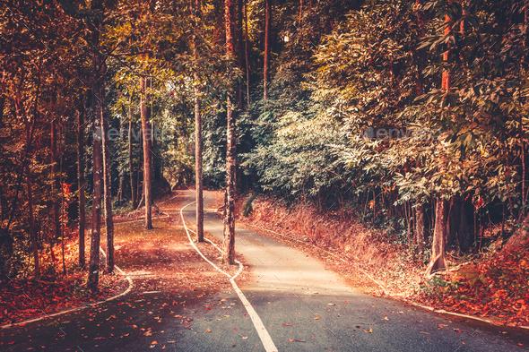 Autumn park road background. Beautiful landscape - Stock Photo - Images