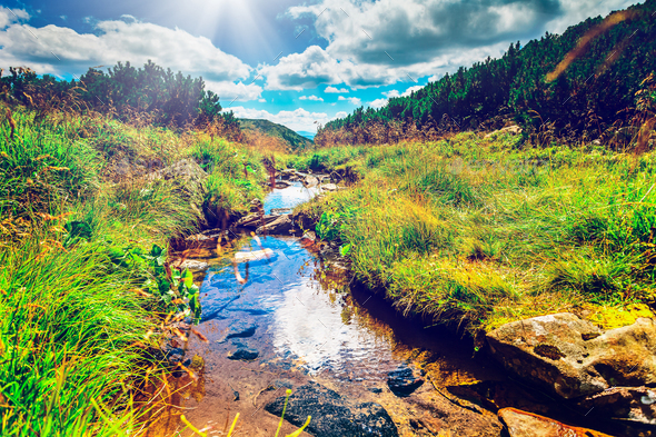 Mountain stream in the morning - Stock Photo - Images